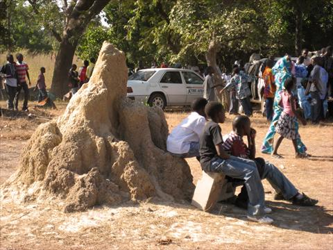 Kids on a termite hill