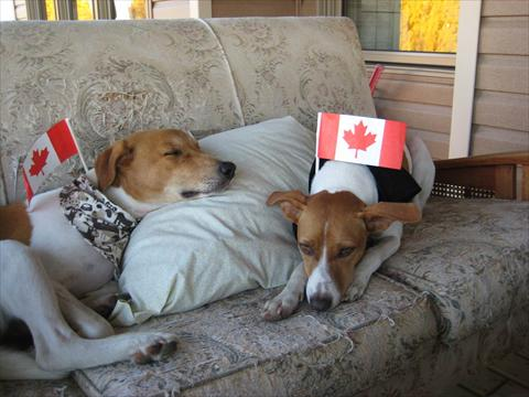 Our Canadian dogs